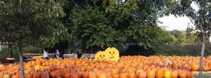 PCC Pumpkins FB